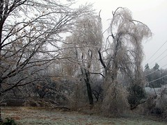 IceStorm_121208_weepingwillowsB