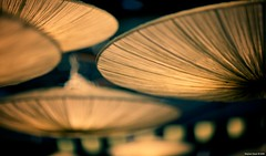 Sumo Sushi | 017.365 (Stephan Geyer) Tags: light orange canon sushi restaurant dof bokeh 85mm explore 5d canon5d lamps canoneos5d project365 explored 8512 85l ef85mmf12lusm canon5dclassic
