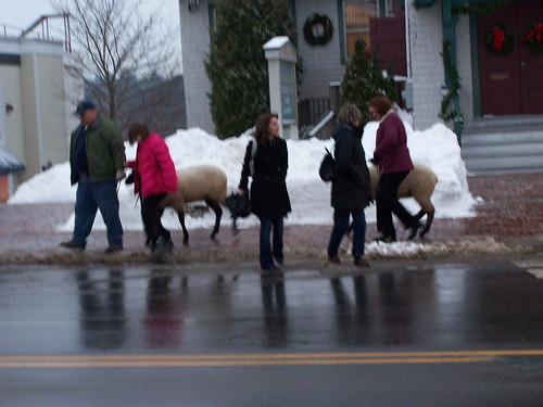 Freeport sheep
