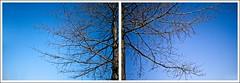 (sarmax) Tags: trees netherlands alberi diptych olanda margraten dittico cimiteroamericano