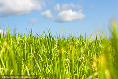 green grass (jk.jkitan) Tags: blue light summer sky cloud sunlight macro green nature beautiful beauty field grass weather closeup clouds rural season landscape botanical outside outdoors countryside leaf spring day view natural bright cloudy outdoor background country grow meadow sunny fresh clean pasture fields environment organic cloudscape freshness nonurban