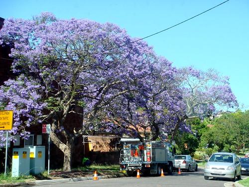 floral suburbs