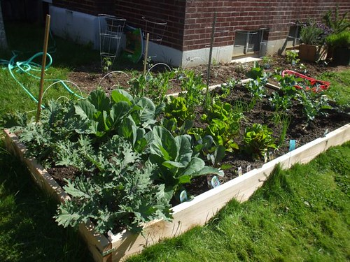 garden - week 4