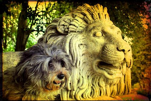 blog con foto cani e info utili