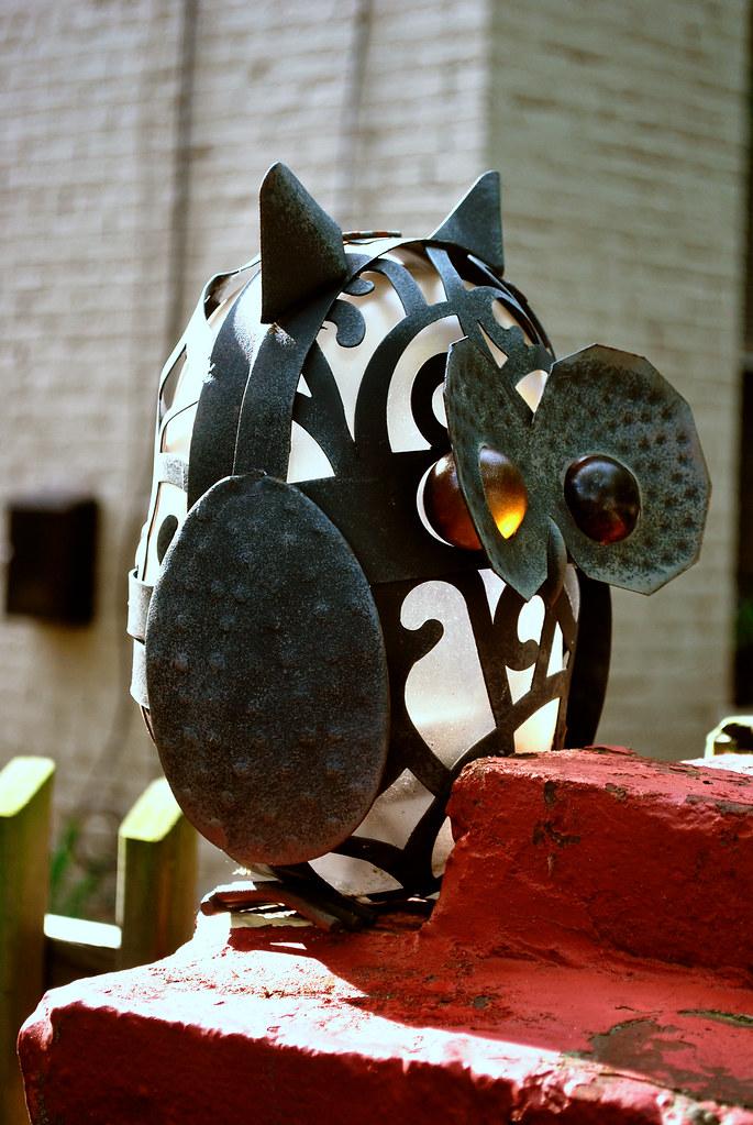 365-6 Owl