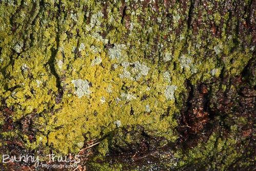 124-lichen