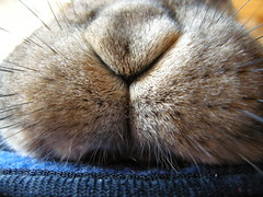 FUNNIEST CLOSEUP (unaerica) Tags: italy hairy pet pets cute rabbit bunny bunnies nature beauty animals closeup fur outdoors nose nikon friend funny italia friendship princess sweet adorable fluffy happiness ears plush moustache occhi curious nase animali lapin tenderness mypet naso coniglio cuccioli kanin coniglietto lopears orecchie unaerica pipola coniglietta coniglietti platinumheartaward