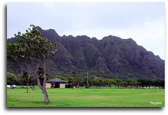 Stand Tall, Be Proud !!! (Mr. FRANTaStiK) Tags: park mountain tree green landscape hawaii haze lawn valley blueribbonwinner golddragon mywinners abigfave aplusphoto diamondclassphotographer flickrdiamond ilovemypic fongetz francistan