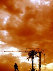 les nouveaux palmiers de marrakech2 (foutrac) Tags: construction marrakech palmiers grues