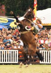 Paradito (Eduardo Amorim) Tags: horses horse southamerica caballo uruguay cheval caballos bravo cavalos prado montevideo pferde cavalli cavallo cavalo gauchos pferd hest hevonen chevaux gaucho  amricadosul montevidu hst uruguai gacho  campero amriquedusud  gachos  sudamrica suramrica amricadelsur  sdamerika jineteada   xxxooo camperos americadelsud gineteada  americameridionale campeiros semanacriolla semanacriolladelprado campeiro eduardoamorim