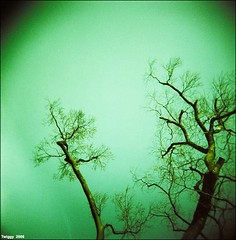 Nothing more !! (Twiggy Tu) Tags: trip trees sky 120 film japan lomo kyoto 2008 holga120n whiteholga