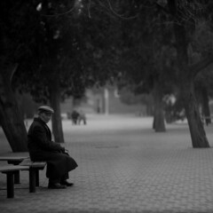 a fair luminous memory (memetic) Tags: china park bw man 120 6x6 hat mediumformat blackwhite solitude alone sitting dof bokeh tl coat beijing hp5 serene   templeofheaven seated ilford tiantan contemplation p6  pentaconsix sonnar 180mm