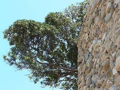mur et ciel bleu.jpg