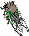 cicada (3doel82) Tags: fish bird animals insect gambar koleksi ikan belajar burung binatang carnivora serangga mamalia amphibi