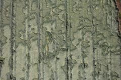 Storm loss (Aerial Photography) Tags: storm green loss field by germany landscape bavaria pattern grafik korn keh ndb 26062006 thronhofengdeteugnlkrkel kornlield