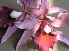 Sugar paste Cattleya Orchid (Whipped Bakeshop) Tags: orchid gumpasteflowers cattleyaorchid ronbenisrael sugarflowers zoelukas whippedbakeshop sugarorchid bestofphilly2010 philadelphiacakescookiesandcupcakes