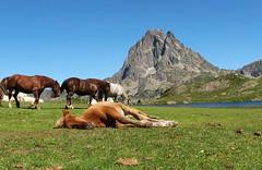 Descanso/ Rest (zubillaga61) Tags: landscape caballos paisaje midi potro ossau ayous