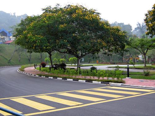 Pokok Berbunga