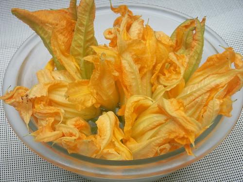 zucchini squash blossoms