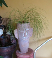Cyperus Papyrus (Jelly Beaver) Tags: face hair head papyrus