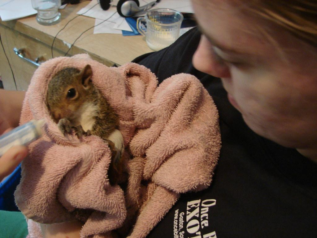 got a baby squirrel..