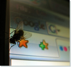 Google Bug by innpictime, on Flickr