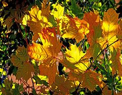 Autumn colors (Dutchdane Photo) Tags: autumn trees fab fall nature colors leaves vivid soe autumnfall abigfave ultimateshot colourartaward goldstaraward naturethroughthelens