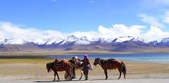 Nam (Namtso Chumo) tso (reurinkjan) Tags: horse nature tibet tibetan namtso 2008 changtang namtsochukmo nyenchentanglha tibetanlandscape storytellingphoto tengrinor visipix janreurink damshungcounty storytellingphotography damgzung        photostorydrapardrung