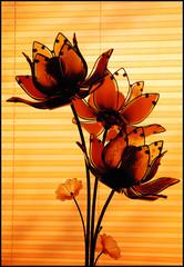 LIGHT FLOWERS (*Furball*) Tags: red orange canada black yellow photomanipulation canon rebel edmonton blind alberta tablelamp flowerdesign xti