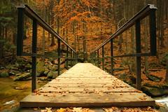 A bridge to the autumn (arminMarten) Tags: wood bridge autumn forest river wasserfall herbst czechrepublic brcke fluss wald    riesengebirge harrachov  tchechischerepublik