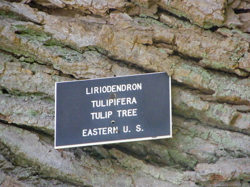 Tulip Tree Plaque