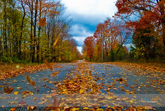 'Fall'ing (aliveandclickin) Tags: road travel autumn fall nature colors leaves wisconsin landscape tour fallcolors autumncolors doorcounty intrestingness explored