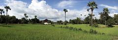 The fields around Angkor Wat, Cambodia