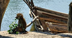 Robinson (LL) Tags: germany deutschland boot zoo monkey ellen foto zoom insel fotos gelsenkirchen affe steinau kaputtes ellensteiof steiof ellenst ellensteinau embodysoul