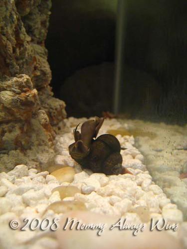 weird snail