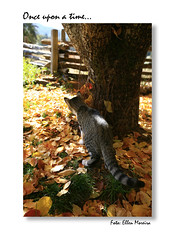 Cats (Ellen Moreira) Tags: cats tree fall cat kid joke hide joking autumm leafe