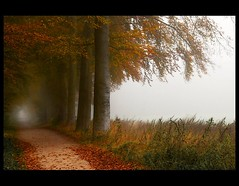 The Guardians (♥ Damona-Art •.¸¸.•´¯`•.♥.•´¯`) Tags: autumn trees light mist fall colors leaves fog woods nikon raw peace mystical paths forests guardians d300 thesecretlifeoftrees