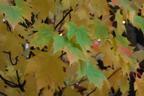 autumn_yellow_green_pale
