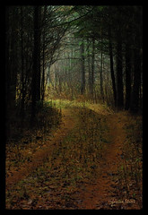 Into the light (Jan_ice) Tags: pine dark woods spooky lightattheend