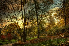 The garden (mivan_via) Tags: trees nature germany hdr nrtingen
