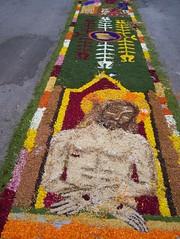 Spello - Festa delle Infiorate (Ciao Anita!) Tags: flowers feest italy italia pg fiori festa perugia bloemen umbria italië spello umbrië
