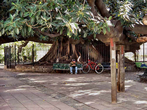 Debajo del Gomero | Under the Rubber Tree, Plaza Francia, Recoleta, Buenos Aires by katiemetz, on Flickr