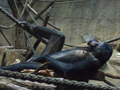 Có phải con người là loài động vật duy nhất coi sex là thú vui?