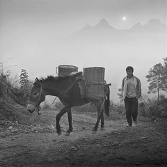 Horseboy ( Yanming ) Tags: china bw mountain 120 film fog rolleiflex sunrise d76 guangdong mule tx400 horseboy