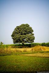 Beauty of my land (Kashif Qadri) Tags: pakistan rural photographer creative fields punjab karachi freelance sugarcane graphicdesigner naturewatcher kashifqadri patoki