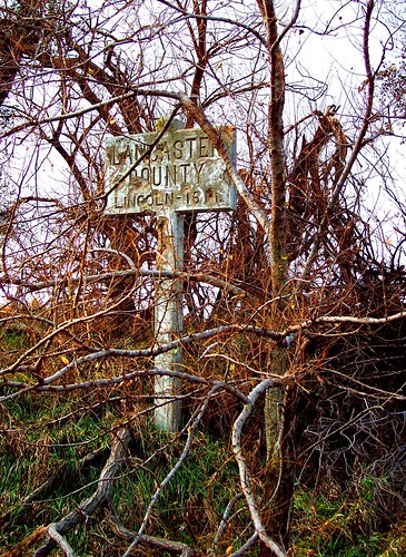 Signpost among dead vegetation