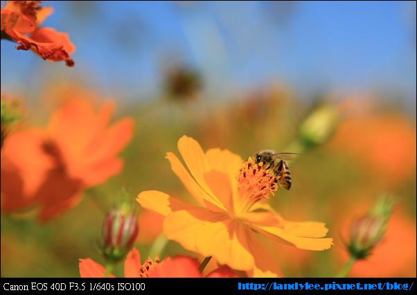 9711-新社花海:Date with Bee_082.jpg
