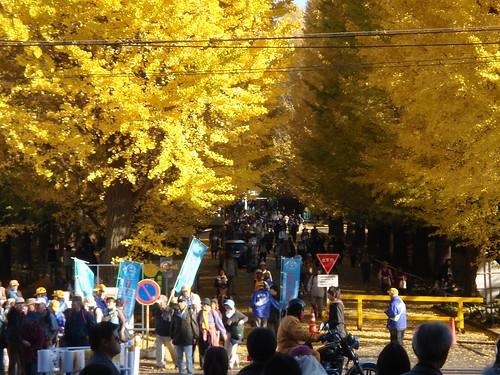 Keio en otoño