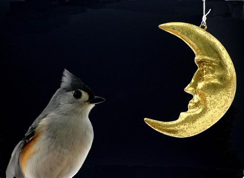 moon-lite