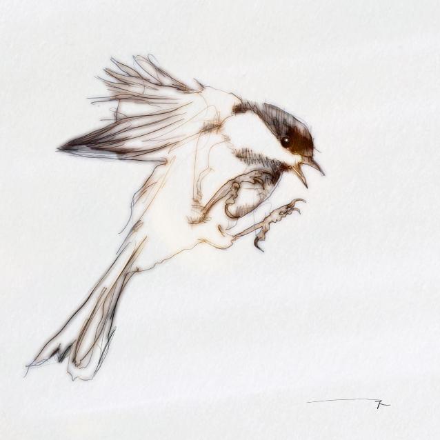 3129450719 99f894f18e o BIRDS & DEATHS